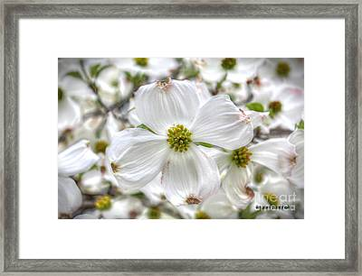 Pure White 1 Framed Print