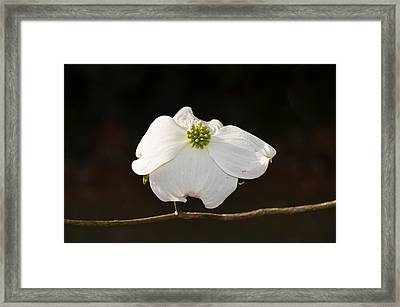 Pure White Framed Print by Linda Brown