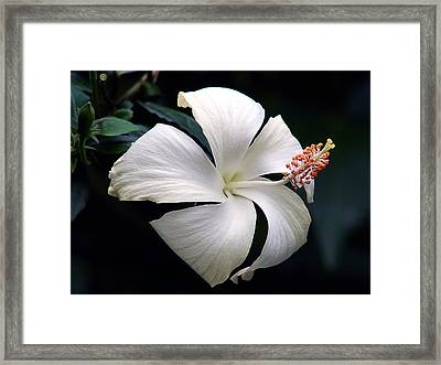 Framed Print featuring the photograph Purity by Blair Wainman
