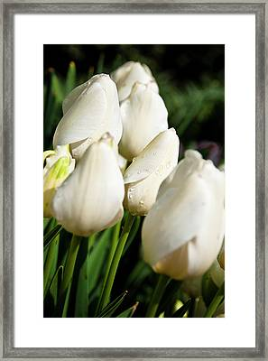 Purity II Framed Print by Tamyra Ayles