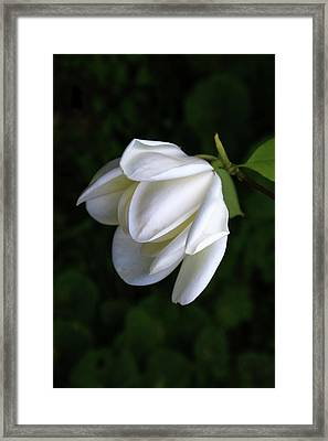Purity In White Framed Print