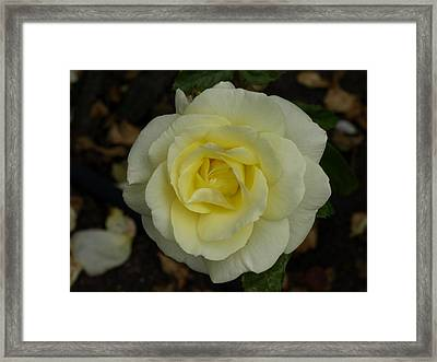 Purity Framed Print by Laura Allenby