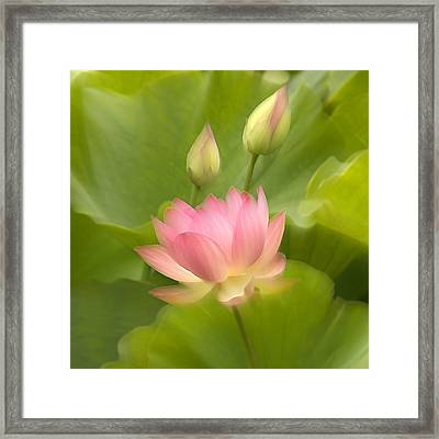 Framed Print featuring the photograph Purity Reborn by John Poon