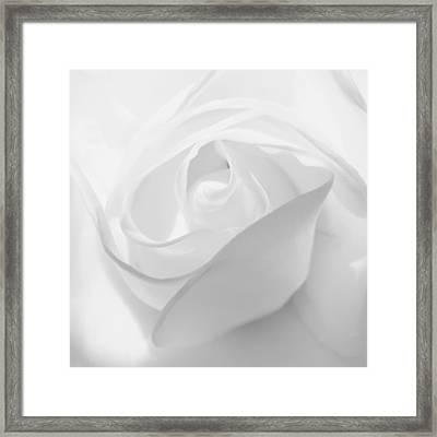 Purity - White Rose Framed Print