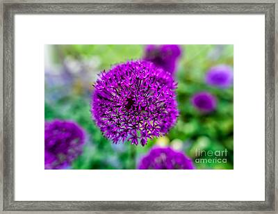 Purple Framed Print by Adrian Evans