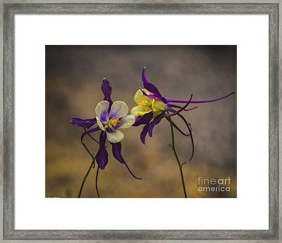 Purple And Gold Framed Print