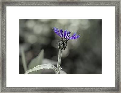 Purple And Grey Framed Print