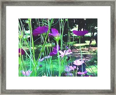 Purple And Pink Cosmos Painting Framed Print