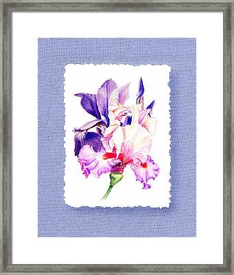 Purple And Pink Iris Flowers Framed Print