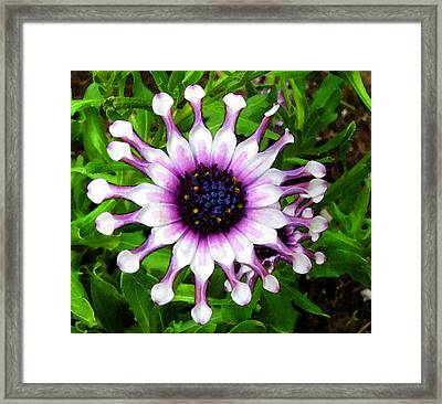 Purple And White Flowers 4  Wc  Framed Print by Lyle Crump