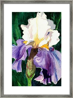 Purple And White Iris Framed Print by Janis Grau