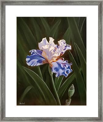 Purple And White Iris Framed Print