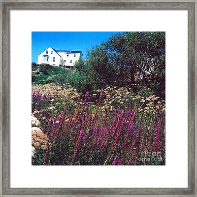Purple Framed Print by Andrea Simon