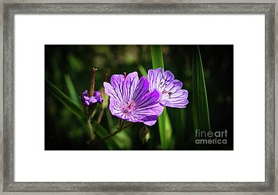 Purple Attraction Framed Print