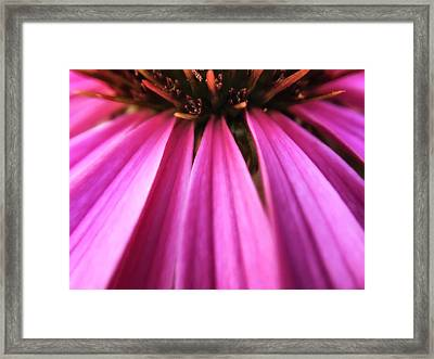 Framed Print featuring the photograph Purple Beauty by Eduard Moldoveanu