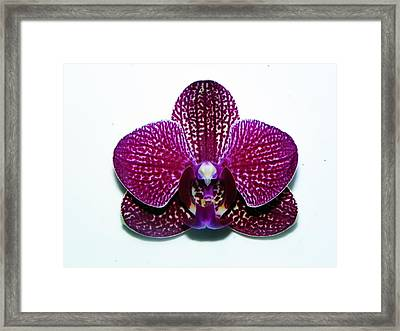 Purple Beauty Framed Print by Joseph Frank Baraba
