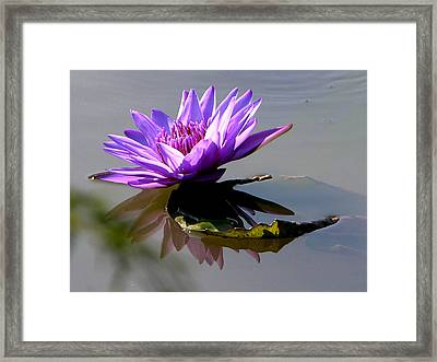 Purple Beauty On The Pond Framed Print by John Lautermilch