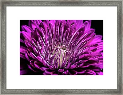 Purple Beauty Framed Print