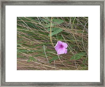 Purple Beauty Framed Print by Warren Thompson