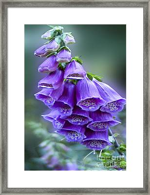 Purple Bell Flowers Foxglove Flowering Stalk Framed Print by Carol F Austin
