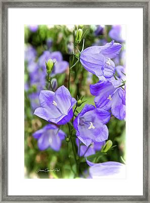 Purple Bell Flowers Framed Print by Joann Copeland-Paul