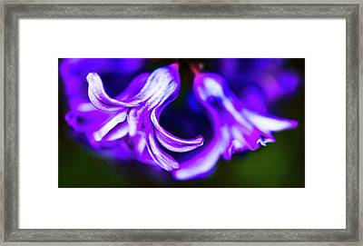 Purple Bells Framed Print