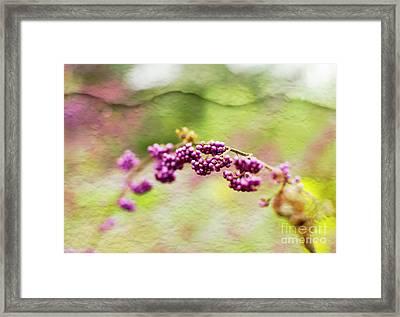 Purple Berry Flowers Framed Print by Pamela Ellis