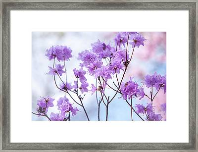 Framed Print featuring the photograph Purple Blue Romance by Jenny Rainbow