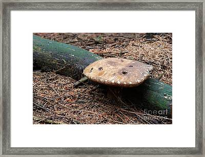 Purple Boletus Framed Print