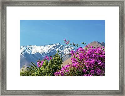 Purple Bougainvillea And Mountains Framed Print by Jess Kraft