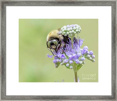 Purple Breakfast Framed Print