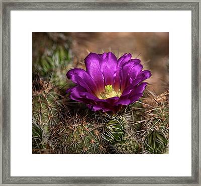 Framed Print featuring the photograph Purple Cactus Flower  by Saija Lehtonen