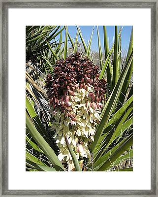 Purple Cactus In Bloom Framed Print by Joan Taylor-Sullivant
