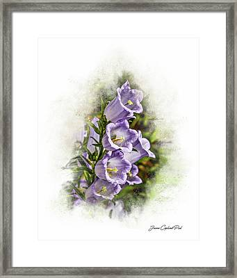 Purple Canterbury Bells Framed Print