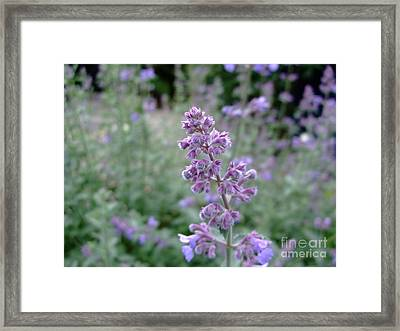 Purple Cat Mint Framed Print