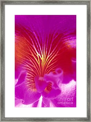 Purple Cattalaya Framed Print