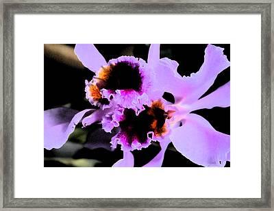 Purple Cattleya Orchid Framed Print by Nanette Hert