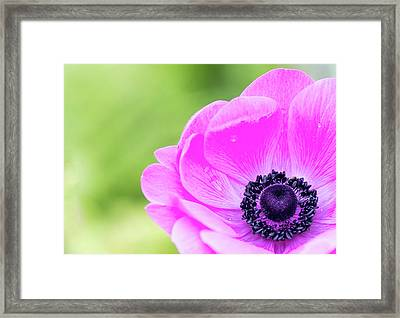 Framed Print featuring the photograph Purple Center by Rebecca Cozart