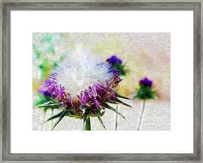 Purple Chaparral  Framed Print