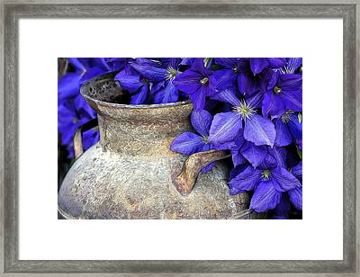 Purple Clematis And A Milk Can Framed Print by James Steele