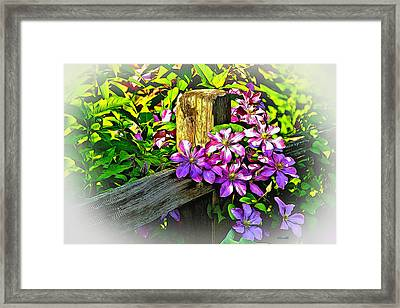Purple Clematis On Split Rail Fence Framed Print