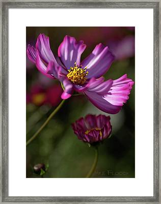 Framed Print featuring the photograph Purple Coleus by Michael Flood