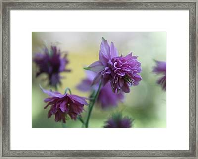 Purple Columbine Framed Print by  Andrea Lazar