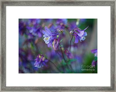 Purple Columbine Montage Framed Print by Mike Reid