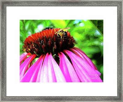 Purple Cone Flower Framed Print by Maria Massimiano