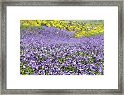 Framed Print featuring the photograph Purple  Covered Hillside by Marc Crumpler