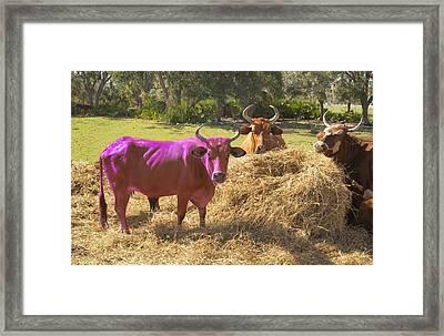 Purple Cow Framed Print