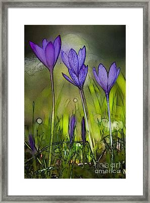 Framed Print featuring the photograph Purple Crocus Flowers by Jean Bernard Roussilhe