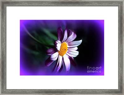 Purple Daisy Flower Framed Print by Susanne Van Hulst