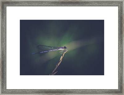 Framed Print featuring the photograph Purple Damsel by Shane Holsclaw